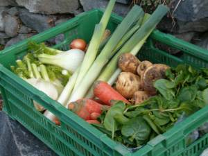 vegetables from the distributor for organic food Linea Bio Verde in Cadenazzo